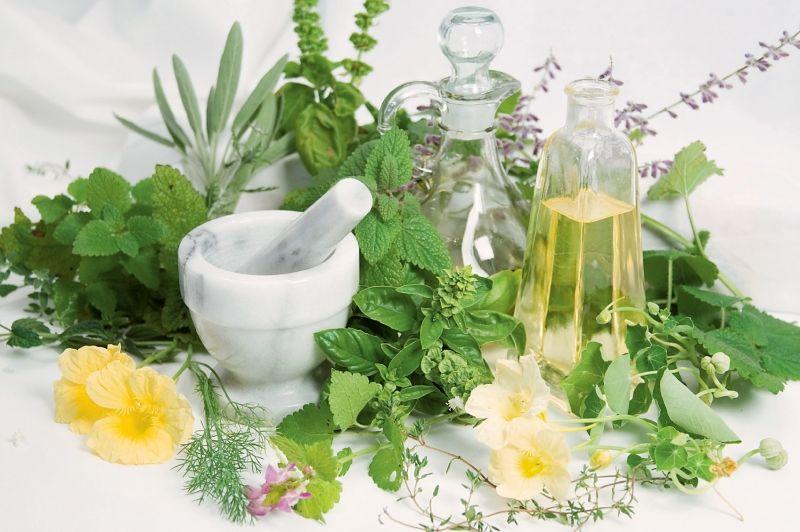 gyógynövények2
