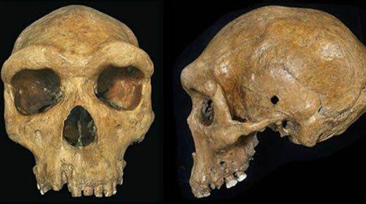 A Broken Hill-i koponya rekonstrukciója. Vajon kik lőhették le őt? Image credit:xenohistorian.faithweb.com