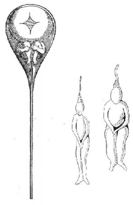 A spermában lévő parányi emberke, ahogy Hartsoecker 1965-ben megrajzolta. (public domain)