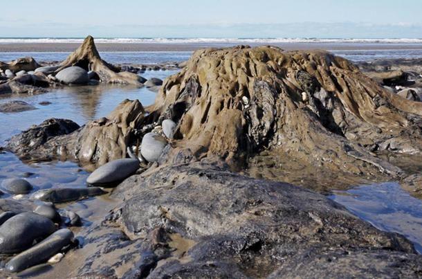 Apály idején olykor feltárulnak a Cardigan Bay mentén a történelem előtti korokban megkövesedett fák . Vajon ez volna Cantre'r Gwaelod földjének legendája? Yrhenwr/Flickr