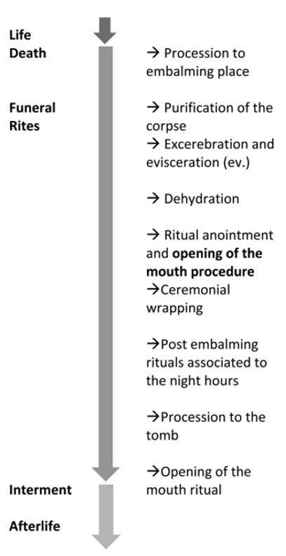 A mumifikálás folyamata Graphic from The Anatomical Record