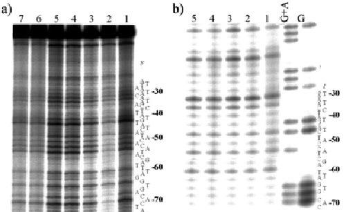 A jobb oldali rész a CXPAC-5 gén gyakoriságát mutatja egy normál emberben, míg a bal oldali Ehnaton mintájából való.