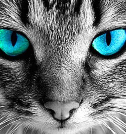 Vajon a kutyák és a macskák látják a szellemeket? A tudomány megerősíti, hogy képesek olyan frekvenciákat érzékelni, melyeket mi nem