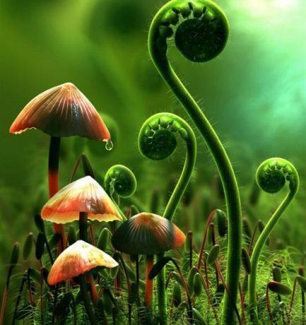 Lehet, hogy a növények süketek, de éreznek szagokat és emlékeznek