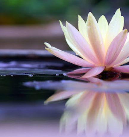 Lecke a vízről a taoista filozófia szerint