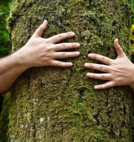 """A tudósok felfedezték, hogy fáknak van """"szívverésük"""""""